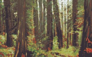 Bosque y helechos